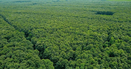 Aerial Drone View Of Forest Trees Landscape In Summer