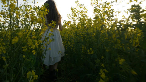Young woman dressed in white walking and touching plants in canola field on a wa Footage