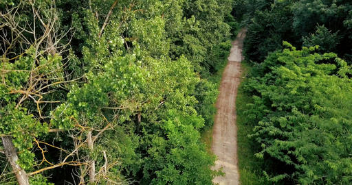 Aerial Drone View Of Forest Trees Landscape In Summer Footage