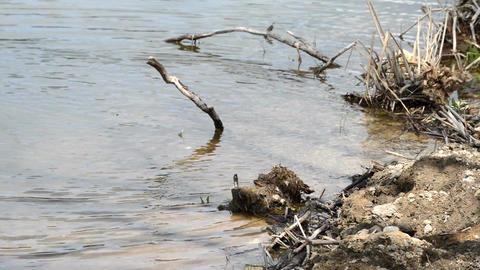 Old drift wood tree lying in the rippling water Footage