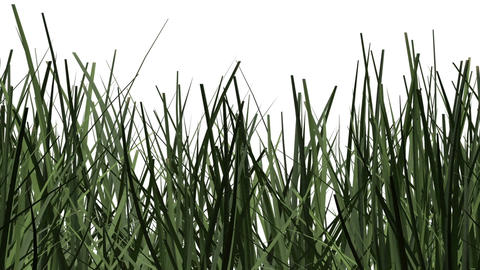 pan and zoom camera - Green grass against white background Stock Video Footage