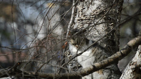 Cat in the tree Stock Video Footage