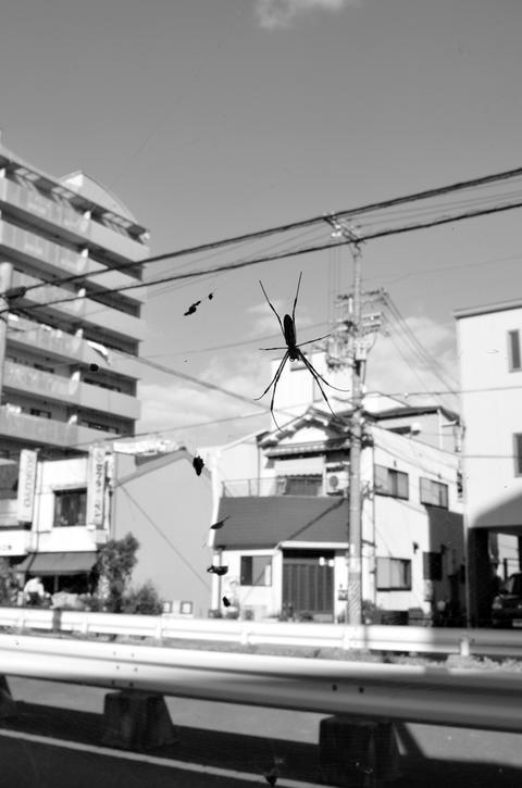 Urban spider Photo