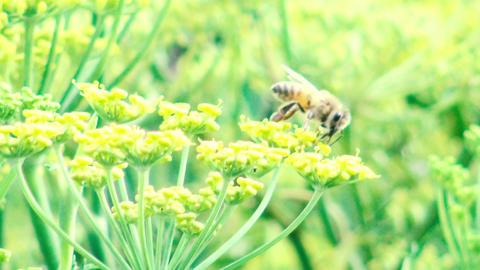 Bee Pollinating Flower Filmmaterial