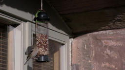Chaffinch Lands On Bird Feeder 画像