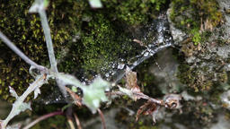 Plant and spider web in the middle of moss on stone ビデオ