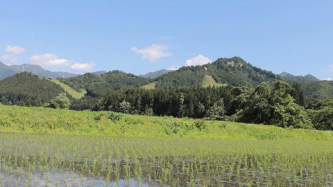 Rice paddy rice country agriculture Natural landscape 画像