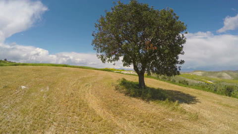 Agricultural fields, lonely tree standing on hill, relaxing aerial view Footage