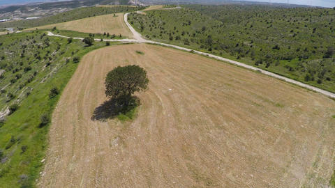 Lonely tree standing in agricultural field, Influence of people on environment Footage