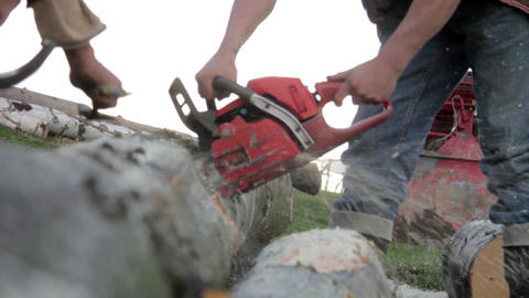 Man operates a chainsaw which cut the branches of a tree in the forest 15c Footage