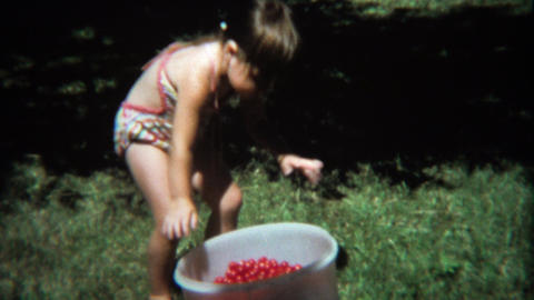 1974: Girl adding handfuls of cherry tomatoes to large bucket Footage