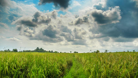 Rice field before rain time lapse Footage