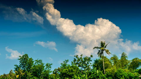 Tropical trees and clouds time lapse Footage