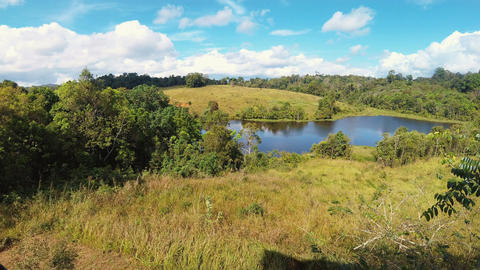 Grasslands at Khao Yai National Park Footage