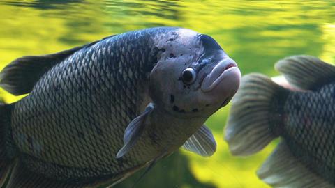 Fish in oceanarium slow motion Footage