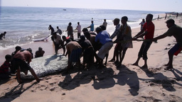 Fisherman pull fish ashore,Batticaloa,Sri Lanka Footage