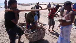 Weighting baskets with fish,Batticaloa,Sri Lanka Footage