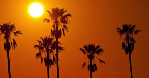 Time Lapse Sun Palm Trees Footage