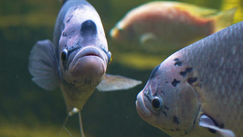 Fish in oceanarium slow motion close-up Footage