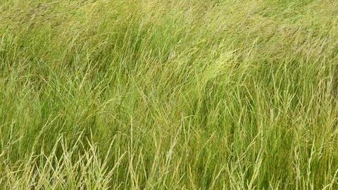 Green grass among wild nature steppe in Ukraine