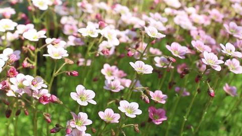bright flowers Flowering moss Stock Video Footage