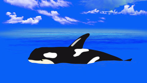 Killer Whale in the Water Animation