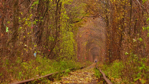 Abandoned Railway under Autumn Colored Trees ビデオ