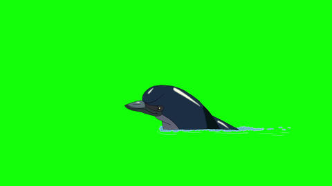 Navy Blue Dolphin Swims in the Water Image