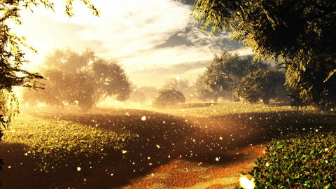 Amazing Natural Wonderland in the Sunset Sunrise with Fireflies 6 Animation