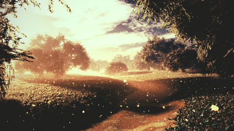 Amazing Natural Wonderland in the Sunset Sunrise with Fireflies 9 Animation