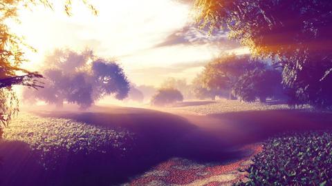 Amazing Natural Wonderland in the Sunset Sunrise with Lightrays 6 Animation