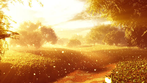 Amazing Natural Wonderland with Fireflies and Lightrays 4 Animation