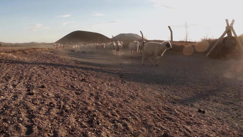 The shepherd drives a flock of sheep along a dusty road far several volcanoes su Footage