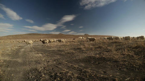 A herd of sheep is walking along a dusty terrain in the distance of a volcano pa Footage
