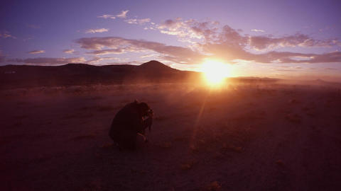 The photographer shoots a flock of sheep in the dust on a beautiful sunset in th Footage