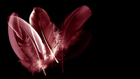 170525-Plumes-a9Red and rose feathers isolated on a black... Stock Video Footage