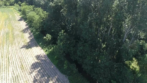 Aerial shot – rising above field and a forest – slow motion Footage