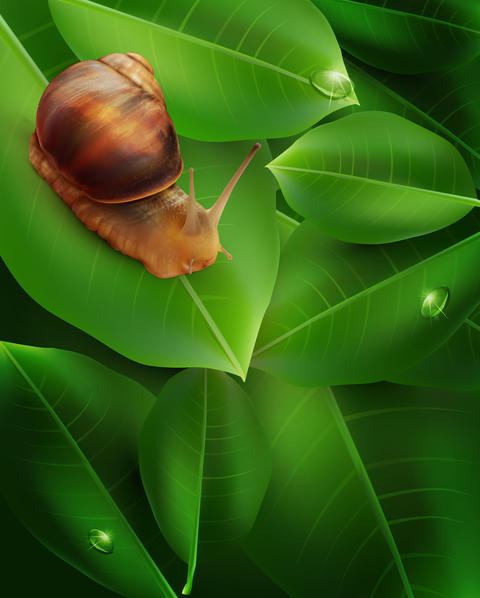 snail crawling on the green leaf フォト