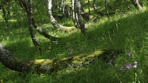 Spring Forest in a Sunny Day Footage