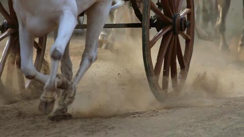Bullock cart race ビデオ