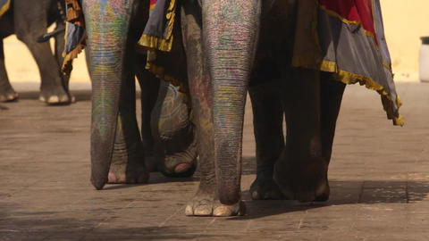 elephants in Amber fort Jaipur, Rajasthan, India. Legs of…, Live Action