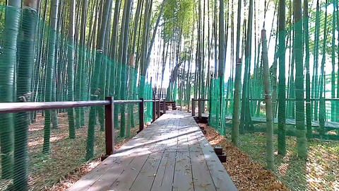 From resting place to bamboo grove Footage