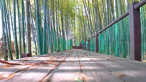 Walking through bamboo groves with a low gaze Footage
