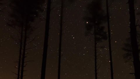 Panning time-lapse video of stars moving behind pine forest Footage