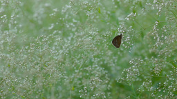 brown butterfly sitting on a plant Footage