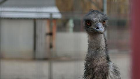 Close up on ostrich bird head Footage