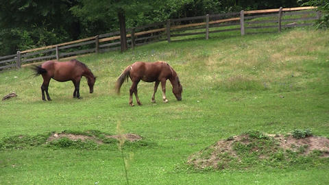 Brown horse standing on a fenced pasture and graze freely 3 Footage