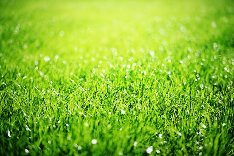 Close up of green grass Photo