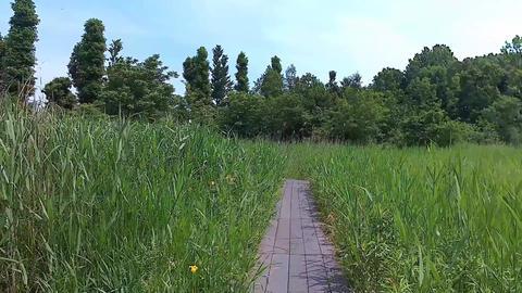 湿地帯を歩く FHD ビデオ