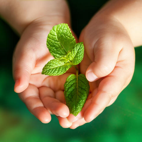 Infant hands holding green plant Foto